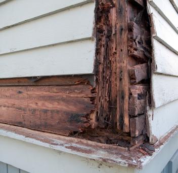 Pest Amp Termite Inspections Hometeam Inspection Service